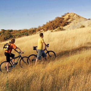 Bikes-in-field1