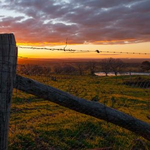 Tuki-fence-post-sunset