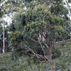 bushwalking-panorama