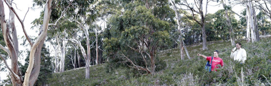 bushwalking-panorama