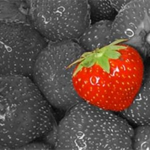 Strawberry-Seed-Website-thumb